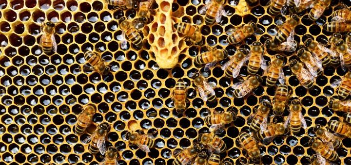 Bienen Exkursion