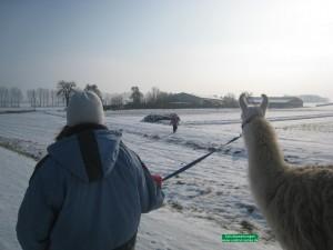 Wandern mit Lamas